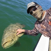 islamorada goliath grouper
