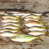 islamorada reef fish