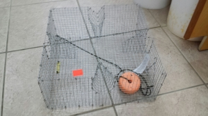Pinfish Trap